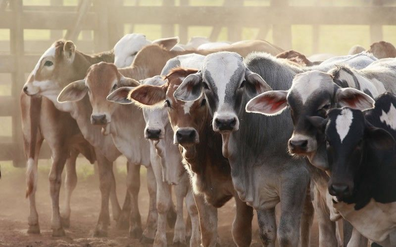 Intensive Livestock Production Putting Human and Animal Health at Risk
