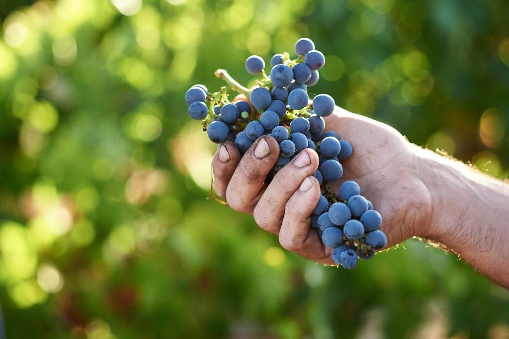 The Environmental Impact of Wine: From Viticulture to Consumption