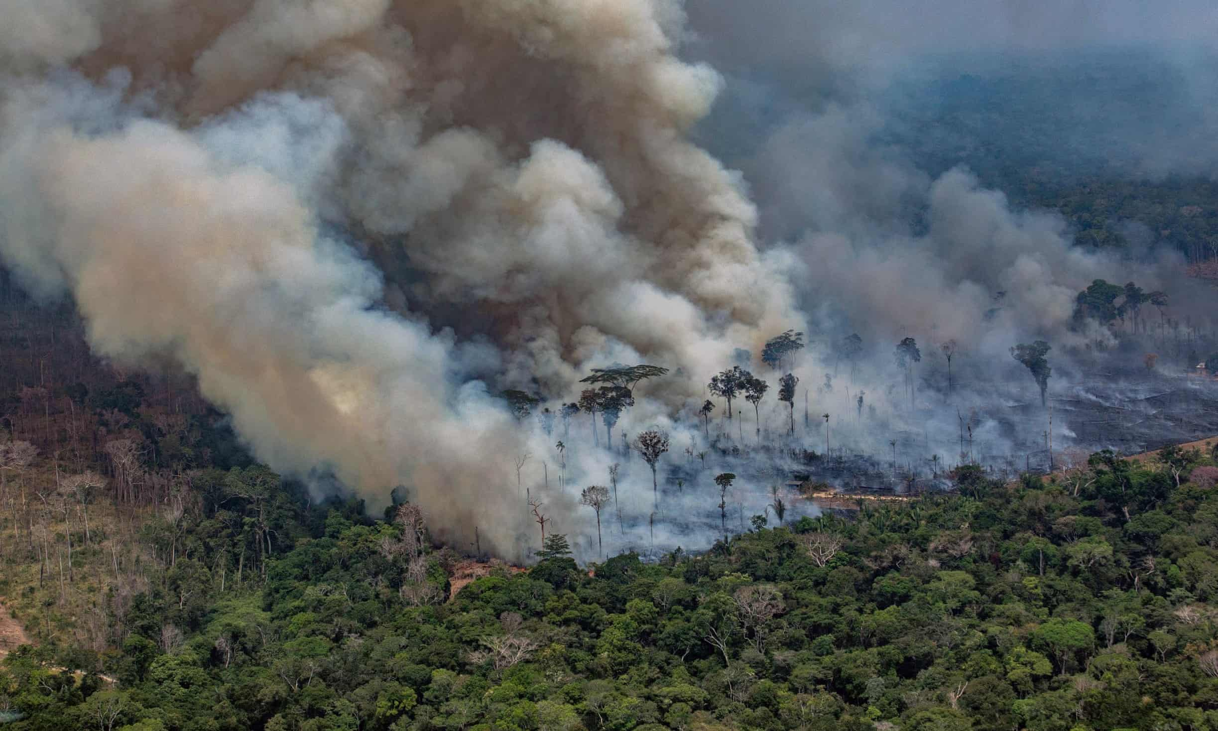 The Amazon Fires: Why They Are Happening And What We Can Do About It.